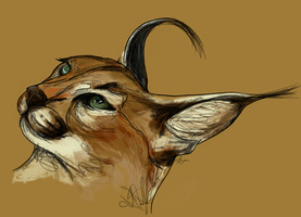 Caracal by TashaCraven