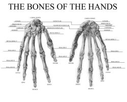 The Bones of the Hands by Gundamjack