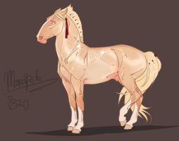8320 The Monarch by NorthEast-Stables