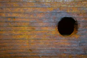 light wood hole texture 7439 by Moon-WillowStock