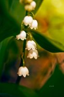 Lily of the valley by Lain-AwakeAtNight