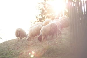 Lambs of God by jackieslife
