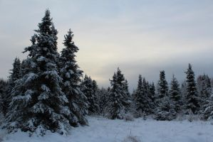 Alaska Stock, Forest 4 by audreystocks
