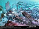 Ocean Floor Stock 1 by Melyssah6-Stock