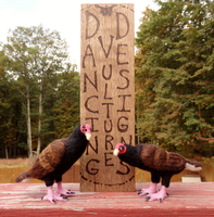 Needle Felted Turkey Vulture Pair by DancingVulture