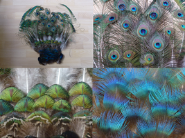 Peacock feathers by Aewendil
