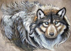 Wolf Intense Stare by HouseofChabrier