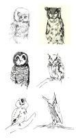 Owl drawings by dyingrose24