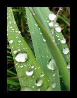 Droplets 13 by mordoc
