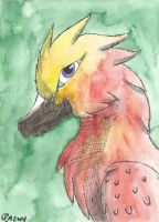 Phoenix Watercolor by Aryncoryn