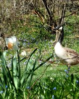 gooses geeses by peaceocake