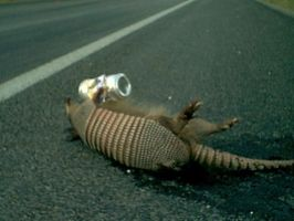 Drunk, Dead Armadillo by Cadmonia