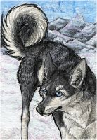 ACEO .:Snow Mountains:. by WhiteSpiritWolf