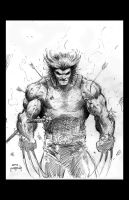 Wolverine by JasonMetcalf