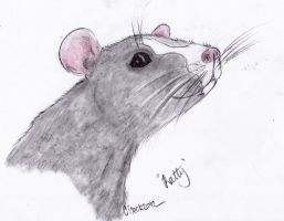 Ratty by BamaBelle2012