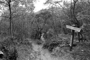 black and white forest path by rayna23
