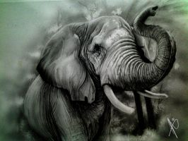 Elephant by HrvojeSilic