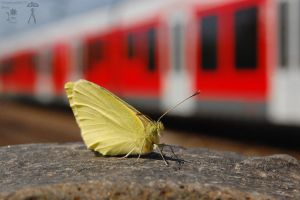 Butterfly next to the rail by morpheus880223