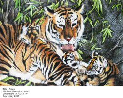 Tigers by Riverlimzhichuan