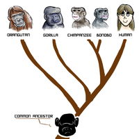The Family Tree by GeoCaecias