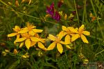 Flying Yellow Flowers by Muhammed-Jetimi