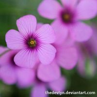 Purple Clover 2 by TheDevlyn