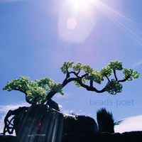 Bonsai kissed by the sun by beads-poet