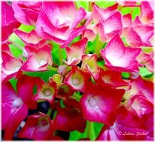 Little Pink Flowers II by lukias-saikul