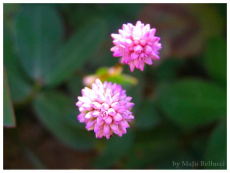 Pink Flower by MaJuSaBe