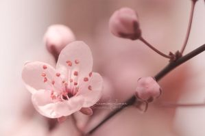 Pretty in Pink I by kuschelirmel