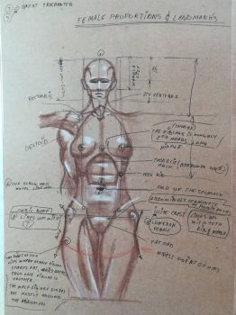 Female proportions study sheet by Andrix9743