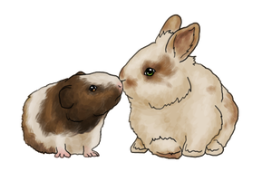 Lionhead rabbit and Guinea Pig by AshleyPhotographics