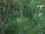 Nice forest swamp by kingdragon01