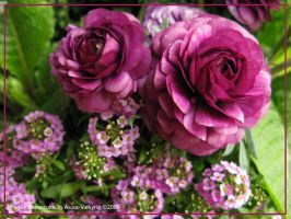 Purple Ranunculus by Asura-Valkyrie