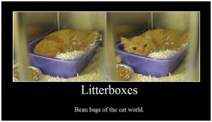 Litterbox DeMotivational by foxfanforever