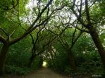A Tunnel Of Trees by Estruda