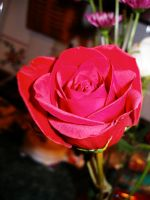 rose1 by lampshaded-stock