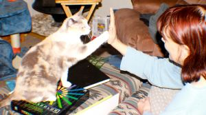 My wife teaching our cat bella to High Five by Darklordd
