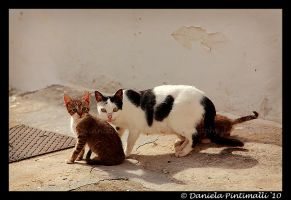 Feral Kitty Family by TVD-Photography