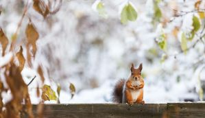 squirrel2 by markotapio