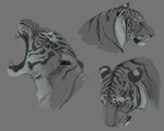 Just some Tiger headshots by Fourth-Star