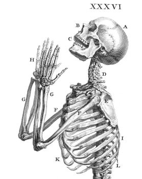 Cheselden Osteographia by anian0