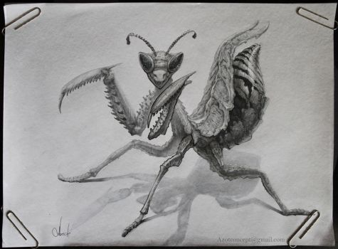 Insect by Azot2017