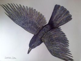 Carrion Crow by Spam5192