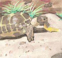 Reznov the Russian Tortoise by ninetales762