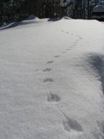 Snow Trails by penguin567