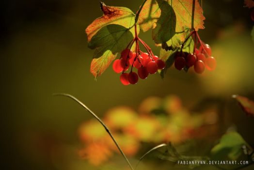 Red Berries by FabianFynn