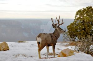 My deer by TimFranklin