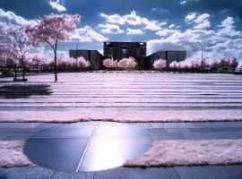 City Trees infrared by MichiLauke