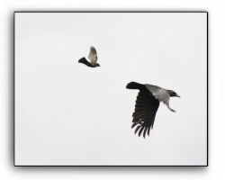 Free Fall Pursuit by Lovell-SimonsJanet